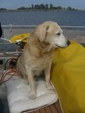 Unser aufmerksamer Bordhund