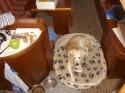 Zeitweise bevorzugter Schlafplatz unseres Hundes
