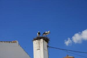 Tahavilla - Storchennest auf dem Schornstein der Schule