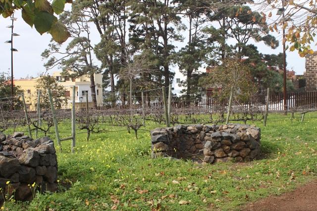 Beispiele für inseltypische Weinanbauformen im Park von Tacoronte