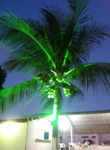 Grüner die Palmen nie grünen ... oder so