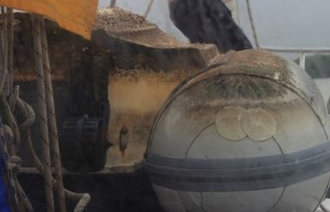 Seepocken haben sich unsere Gummiwutz als Quartier ausgesucht