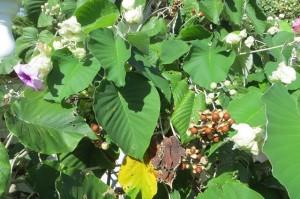 Verschiedene Stadien an einer Pflanze - leider wissen wir nicht, um welche es sich handelt