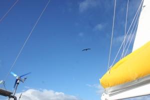 Akrobatik am Himmel - schwereloses Gleiten in der Thermik unserer Segel