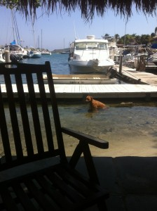Auch die Hunde suchen Abkühlung