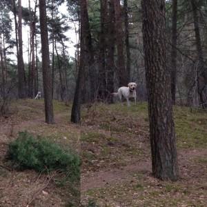Der Leihhund wartet gut getarnt darauf, dass wir den Ball möglichst weit weg werfen