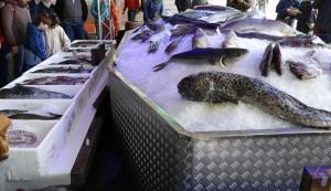 Auf Eis gelegt - Fischparty Bremerhaven