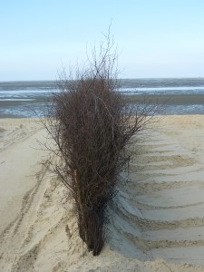 Besenreihe im Sand