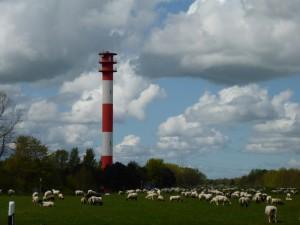 Wenn mal so viele LKW hier am JadeWeserPort wie Schafe unterwegs sind .....