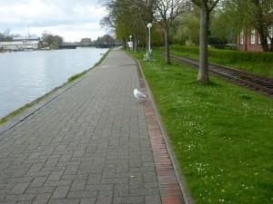 Bontekai - viel Promenade, wenig los. Und eine einsame Möwe beäugt uns neugierig