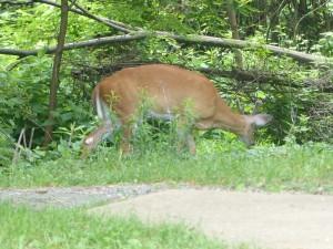 23 Meter Abstand soll Mensch von den Deers halten. Denen ist das egal, die rücken uns Menschen gerne auch mal näher auf die Pelle