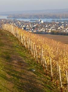 Blick über Weinberge und Rhein von Schloss Johannisberg aus