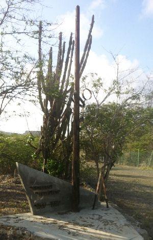 Kaktuskunst.JPG