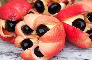 ackee_fruit.jpg